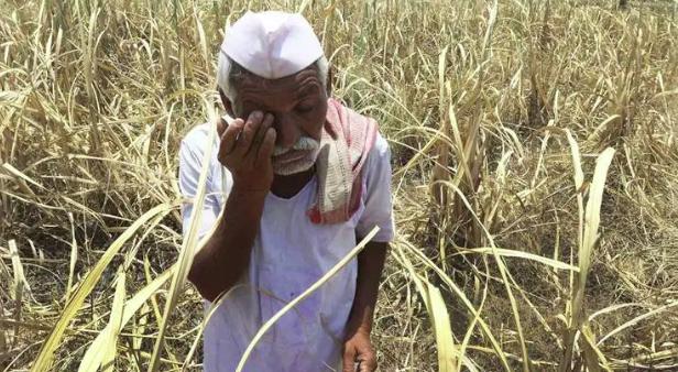 ദേശീയ ക്രൈം റെക്കോര്ഡ് ബ്യൂറോ റിപോര്ട്ടില് നിന്ന്കര്ഷക ആത്മഹത്യകളുടെ കണക്ക് ഒഴിവാക്കി