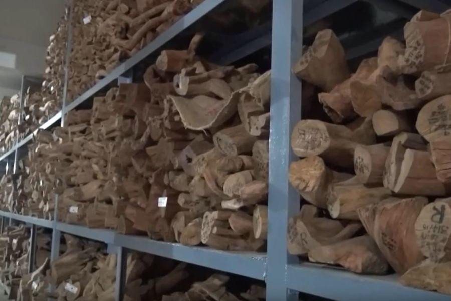 കോന്നി സർക്കാർ തടി ഡിപ്പോയിൽ ചന്ദനത്തടി ചില്ലറ വിൽപന ആരംഭിച്ചു